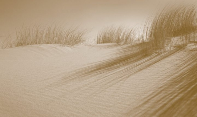 Sand dunes with grass and shadow